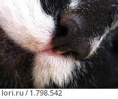Купить «Кошкин нос», фото № 1798542, снято 26 июня 2010 г. (c) Константин Кург / Фотобанк Лори