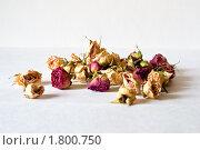 Сухие цветы. Стоковое фото, фотограф Денис Петров / Фотобанк Лори