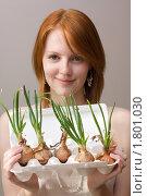 Купить «Луковый ассортимент», фото № 1801030, снято 24 июня 2010 г. (c) Валерий Степанов / Фотобанк Лори
