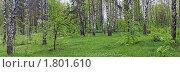 Купить «Лесная поляна», фото № 1801610, снято 14 ноября 2019 г. (c) Вадим Кондратенков / Фотобанк Лори