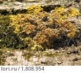 Колония грибочков на мхе. Стоковое фото, фотограф Зубков Борис / Фотобанк Лори