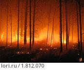 Берегите лес от огня! Лесной пожар. Стоковое фото, фотограф Евгений Дубинчук / Фотобанк Лори
