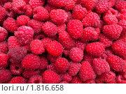 Купить «Красная малина», фото № 1816658, снято 5 июля 2010 г. (c) Алина Акимова / Фотобанк Лори