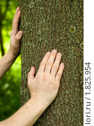 Руки на стволе дерева. Стоковое фото, фотограф Андрей Цалко / Фотобанк Лори