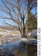 Весенние ручьи. Стоковое фото, фотограф nikolay uralev / Фотобанк Лори