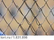 Купить «За решеткой», фото № 1831898, снято 2 июля 2010 г. (c) Пьянков Александр / Фотобанк Лори