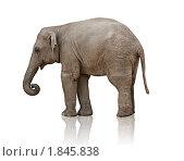 Слоненок. Стоковое фото, фотограф Виктор Застольский / Фотобанк Лори