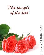 Букет красных роз. Стоковое фото, фотограф Александра Шкиндерова / Фотобанк Лори