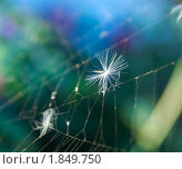 Купить «Паутина крупным планом», фото № 1849750, снято 19 июля 2010 г. (c) Олег Кириллов / Фотобанк Лори
