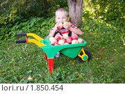 Купить «Мальчик в саду с урожаем яблок в тележке», фото № 1850454, снято 10 сентября 2009 г. (c) Елена Блохина / Фотобанк Лори
