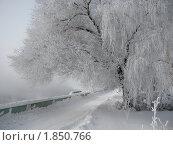 Купить «Зимняя сказка», фото № 1850766, снято 8 февраля 2010 г. (c) Кашкарева Светлана / Фотобанк Лори