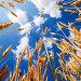 Золотистые колосья на фоне синего неба с облаками, фото № 1853318, снято 27 июня 2010 г. (c) Евгений Захаров / Фотобанк Лори