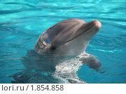 Купить «Дельфин», фото № 1854858, снято 19 сентября 2006 г. (c) V.Ivantsov / Фотобанк Лори
