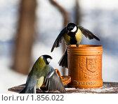 Купить «Синица большая, Great Tit, Parus major», фото № 1856022, снято 17 марта 2010 г. (c) Василий Вишневский / Фотобанк Лори