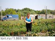 Сбор и загрузка урожая в поле у фермера. Стоковое фото, фотограф Андрей Кириллов / Фотобанк Лори
