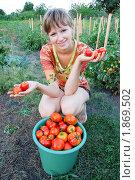 Купить «Сбор урожая», фото № 1869502, снято 28 июля 2010 г. (c) Ярослав Крючка / Фотобанк Лори