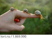 Три улитки. Стоковое фото, фотограф Savenkova Natalia Anatolievna / Фотобанк Лори