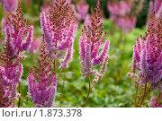 Растения, летний день. Стоковое фото, фотограф Катыкин Сергей / Фотобанк Лори