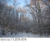 Зимний лес. Стоковое фото, фотограф Татьяна Гомонова / Фотобанк Лори