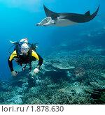 Купить «Дайвер и манта на фоне коралловых рифов», фото № 1878630, снято 1 октября 2007 г. (c) Ольга Хорошунова / Фотобанк Лори