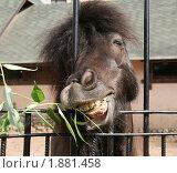 Купить «Смешная лошадь», эксклюзивное фото № 1881458, снято 11 мая 2008 г. (c) Щеголева Ольга / Фотобанк Лори