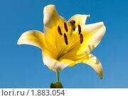 Купить «Цветок лилии на фоне неба», эксклюзивное фото № 1883054, снято 17 июля 2010 г. (c) Юрий Морозов / Фотобанк Лори