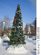 Купить «Новогодняя ель», фото № 1883658, снято 10 января 2010 г. (c) Parmenov Pavel / Фотобанк Лори