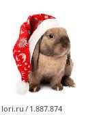 Купить «Карликовый вислоухий кролик в новогоднем колпаке», фото № 1887874, снято 4 августа 2010 г. (c) Юлия Машкова / Фотобанк Лори