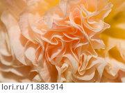 Купить «Шток-роза (Alcea rosea)», эксклюзивное фото № 1888914, снято 3 августа 2010 г. (c) Александр Алексеев / Фотобанк Лори