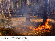 Пожар в лесу летом в России. Стоковое фото, фотограф Сергей Матвеев / Фотобанк Лори
