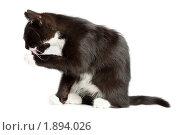 Купить «Черный котенок», фото № 1894026, снято 30 июля 2010 г. (c) Василий Вишневский / Фотобанк Лори