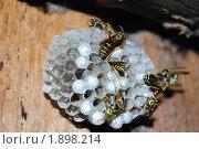 Купить «Осиное гнездо», фото № 1898214, снято 12 июля 2010 г. (c) Евгения Плешакова / Фотобанк Лори