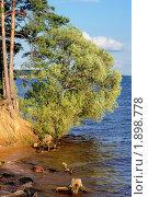 Купить «Ива», фото № 1898778, снято 18 июня 2010 г. (c) Сергей Разживин / Фотобанк Лори
