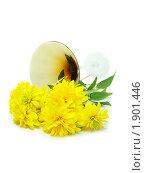 Купить «Желтые цветы, золотые шары», фото № 1901446, снято 30 июля 2010 г. (c) Blekcat / Фотобанк Лори