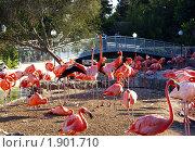 Фламинго (2010 год). Стоковое фото, фотограф Nataliya Sabins / Фотобанк Лори