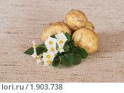 Купить «Цветы и клубни картофеля на мешковине», эксклюзивное фото № 1903738, снято 22 июля 2010 г. (c) Шичкина Антонина / Фотобанк Лори