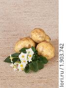 Купить «Цветы и клубни картофеля на мешковине», эксклюзивное фото № 1903742, снято 22 июля 2010 г. (c) Шичкина Антонина / Фотобанк Лори