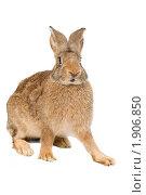 Купить «Кролик», фото № 1906850, снято 7 августа 2010 г. (c) Дмитрий Калиновский / Фотобанк Лори