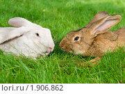 Купить «Кролики», фото № 1906862, снято 7 августа 2010 г. (c) Дмитрий Калиновский / Фотобанк Лори