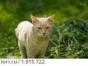 Кошка в траве. Стоковое фото, фотограф Денис Петров / Фотобанк Лори