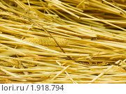Купить «Соломенный фон», фото № 1918794, снято 8 августа 2010 г. (c) Елисей Воврженчик / Фотобанк Лори