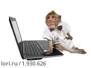 Купить «Обезьяна с ноутбуком», фото № 1930626, снято 10 июля 2010 г. (c) Ирина Кожемякина / Фотобанк Лори