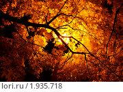 Золотая осень. Стоковое фото, фотограф Иван Котов / Фотобанк Лори