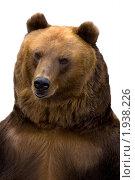 Купить «Медведь бурый», фото № 1938226, снято 18 сентября 2007 г. (c) Василий Вишневский / Фотобанк Лори