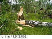 Последствия урагана. Стоковое фото, фотограф Жаренов Александр / Фотобанк Лори