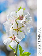 Купить «Весеннее цветение», фото № 1946730, снято 22 августа 2010 г. (c) Кропотов Лев / Фотобанк Лори