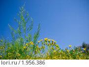 Полевые цветы на фоне синего неба. Стоковое фото, фотограф Татьяна Метельская / Фотобанк Лори