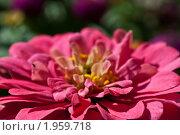 Цветок. Стоковое фото, фотограф Юлия Казакова / Фотобанк Лори