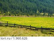Купить «Цветущий луг», фото № 1960626, снято 17 августа 2010 г. (c) Andrey M / Фотобанк Лори