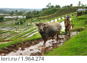 Азиатские фермеры (2010 год). Стоковое фото, фотограф Морозова Татьяна / Фотобанк Лори